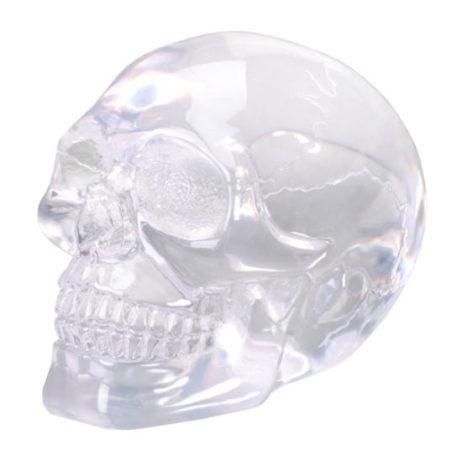 Translucent Skull