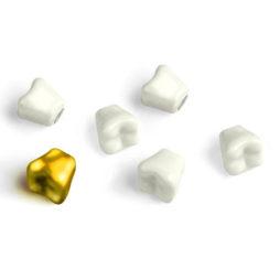 Wisdom Teeth Magnets Set Of 6