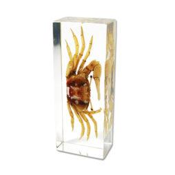 Fiddler Crab Paperweight