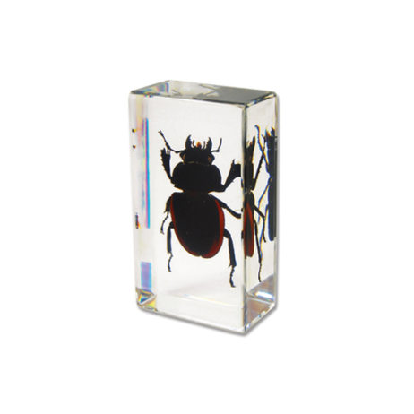 Chinese Stag Beetle Paperweight