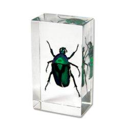 Green Rose Chafer Beetle Paperweight