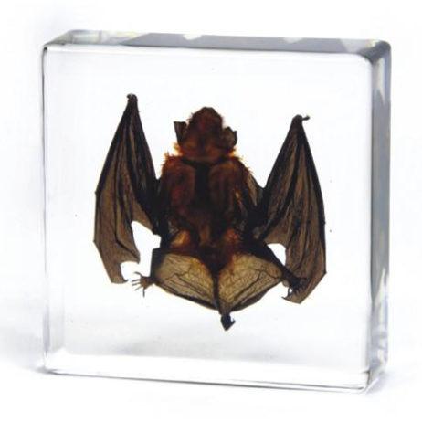 Vampire Bat In Resin-Small