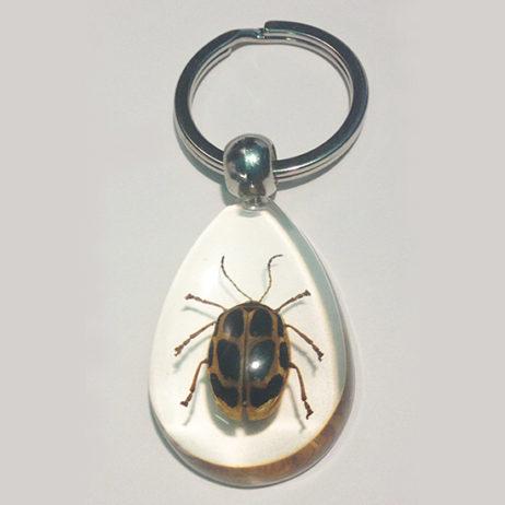 Spotted Leaf Beetle Keychain