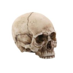 Resin Skull Head With Natural Finish