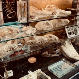 Anatomy + Taxidermy